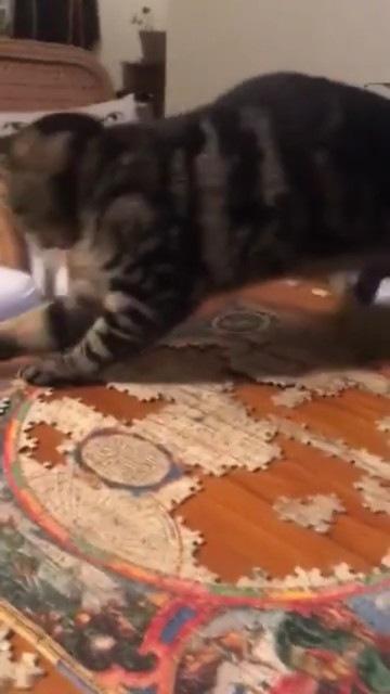 後ろに滑る猫