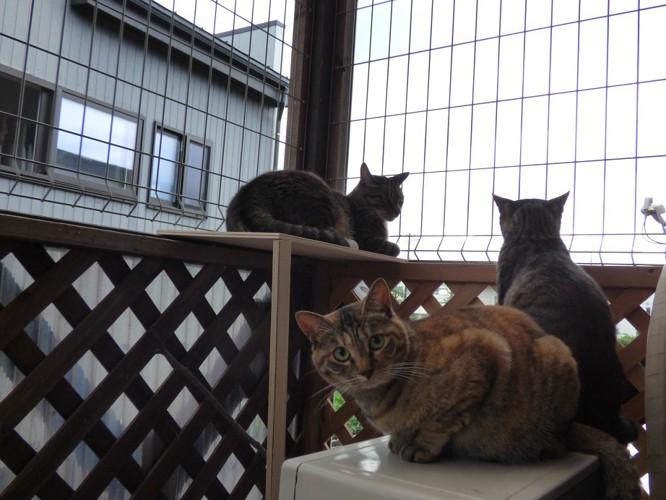 見晴台に集まる猫たち