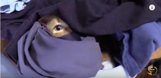 洗濯物に隠れる猫