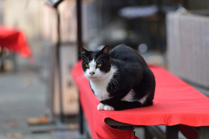 赤い布が掛けられたテーブルでくつろぐ猫