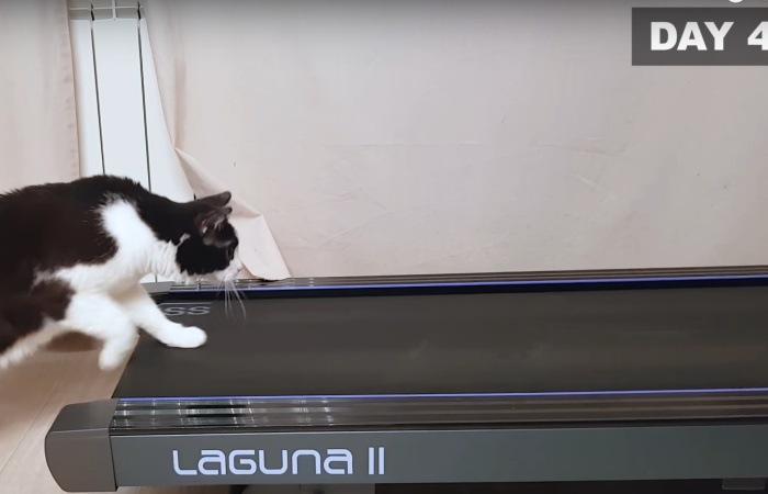 ランニングマシーンに前足を乗せる猫(4日目)