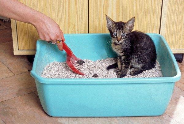 トイレを綺麗にする人と子猫