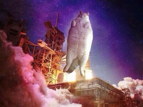 ロケットの猫