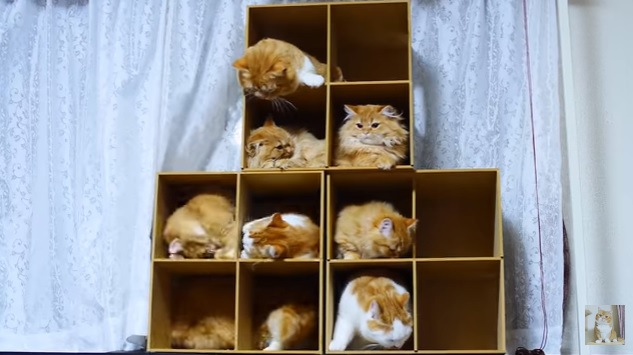 箱に入る猫たち(ほぼ睡眠中)