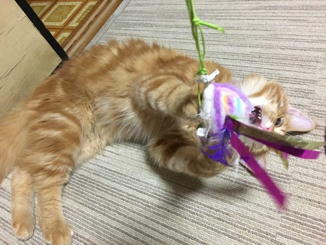 オモチャで遊ぶ茶色い猫