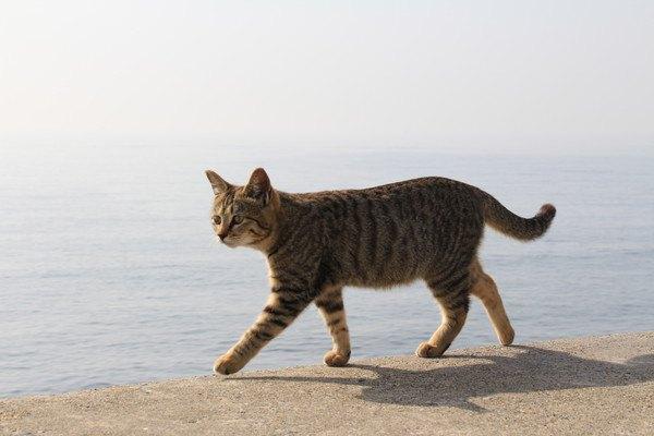 堤防を歩く猫