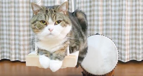 背後に太鼓、こちらを見る猫