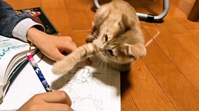 右手を出す子猫
