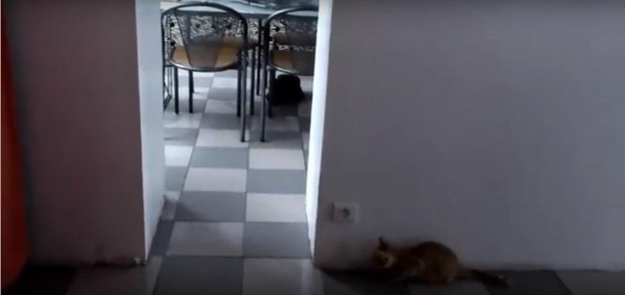 待ち受ける猫