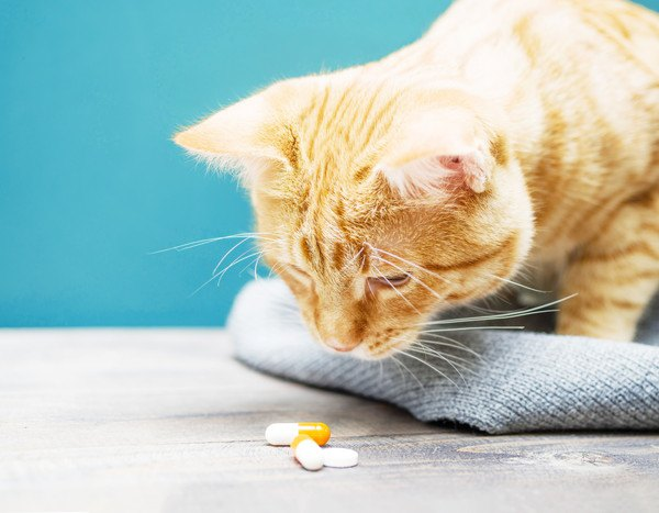 薬をみる猫