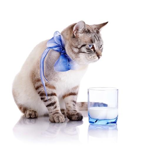 グラスと猫