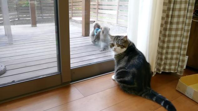 こちらを向く猫と2匹の猿