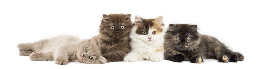 柄の違う4匹の子猫たち