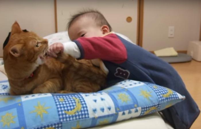 猫の顔にしっぽを近づける赤ちゃん
