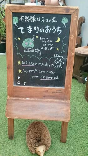 猫カフェの黒板看板