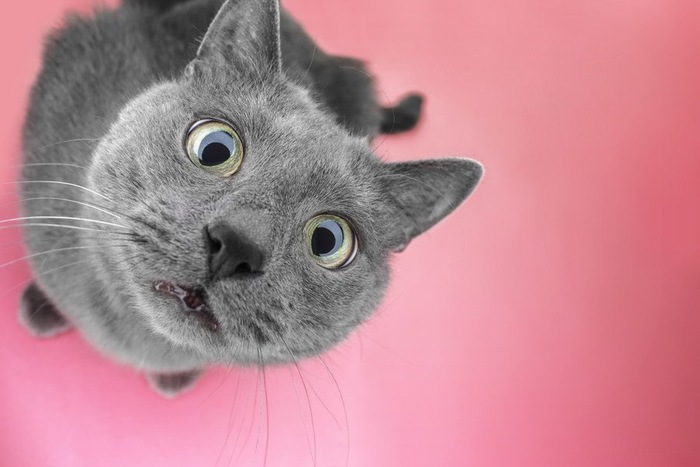 びっくり顔を見せる猫