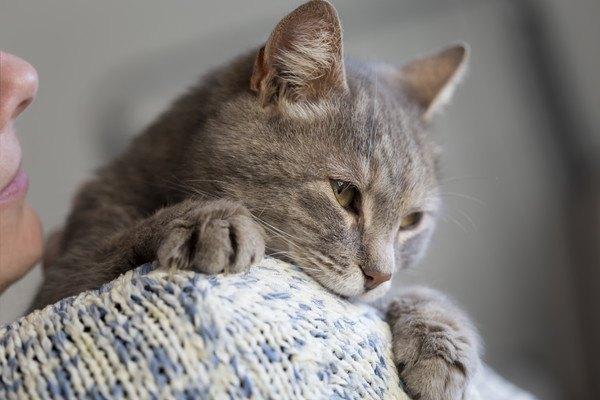 抱っこされる灰色猫