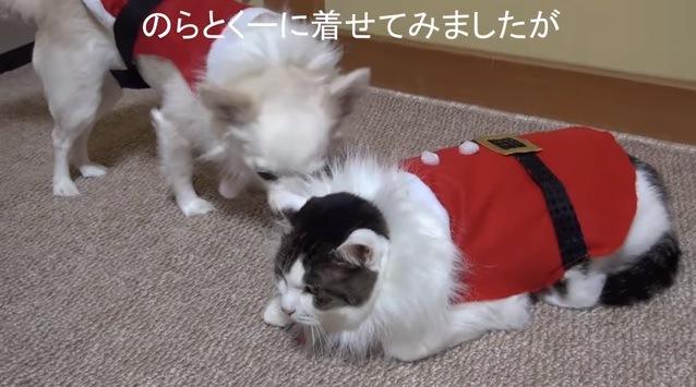 サンタ服を着た猫と犬
