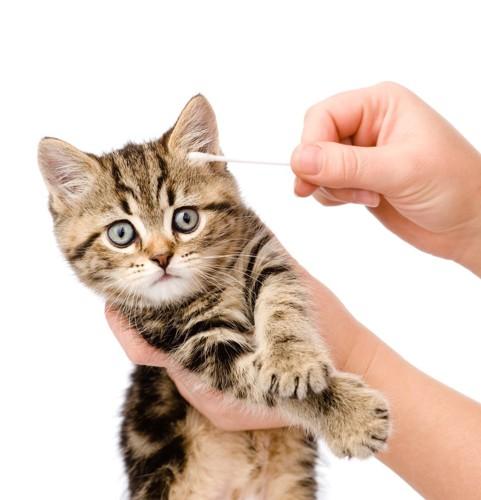 綿棒と子猫