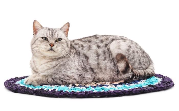丸いマットの上でくつろぐ猫