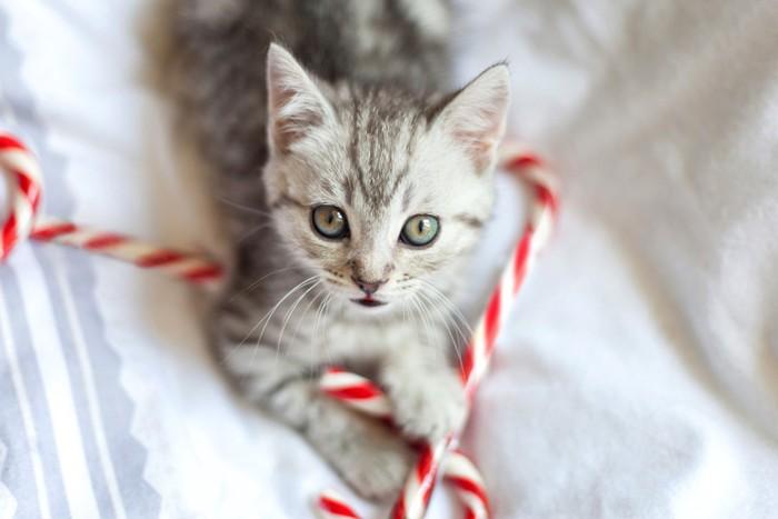 クリスマスキャンディーと猫