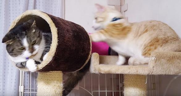 後ろからそっと押す茶トラ白猫