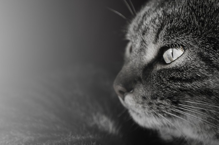 横顔を見せる黒猫