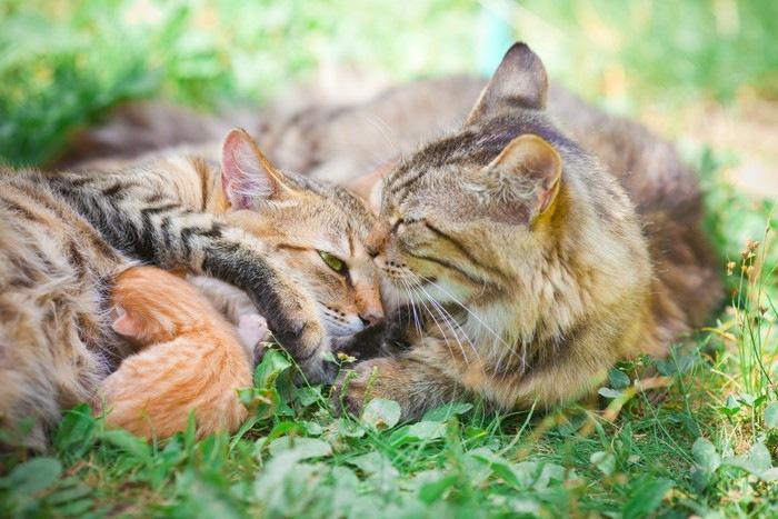 草の上の父猫と母猫と子猫