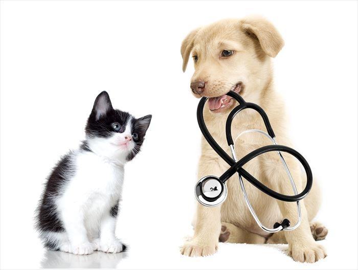 犬のお医者さんと猫