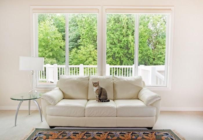 大きなソファーに座る猫