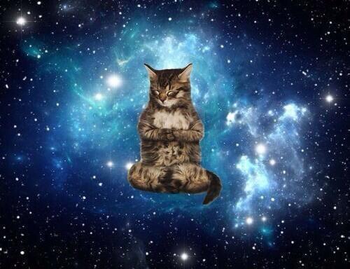 宇宙で悟りを開いた猫