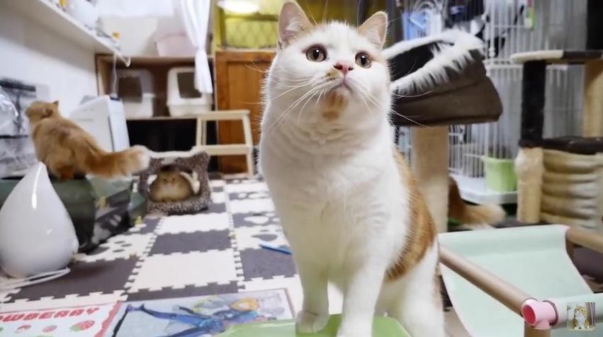 上を見上げる猫(1匹)