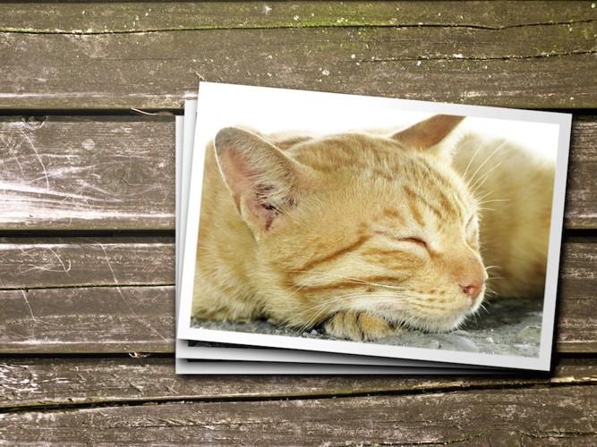 チャトラ猫の寝顔写真