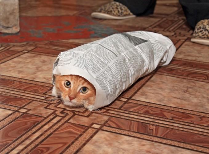 新聞紙で巻かれる猫