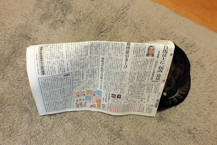 新聞紙を立てた