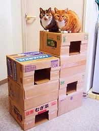 ダンボールの上に猫2匹