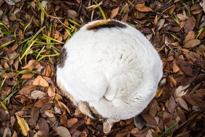 丸くなる猫