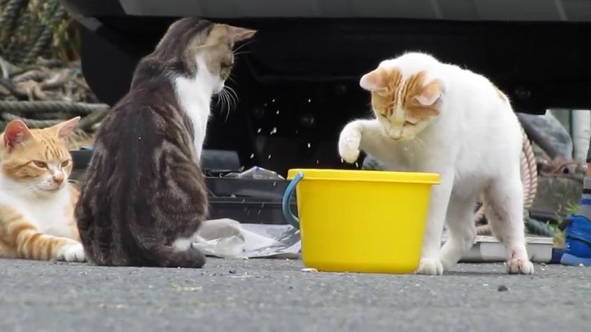 手を振る右の猫