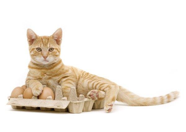 卵のパックに乗る猫