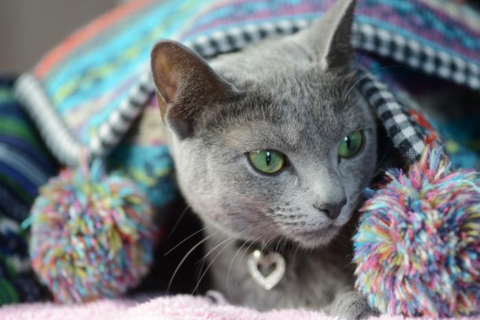 冬の猫イメージ