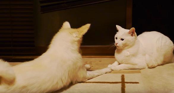 向かい合う白い犬と猫