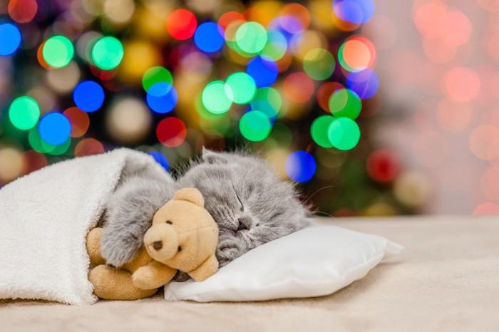 熊のぬいぐるみを抱きしめて白い枕で寝る子猫