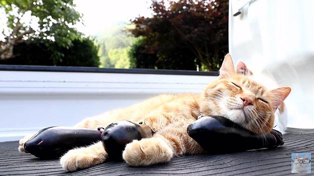 完全に寝に入った猫