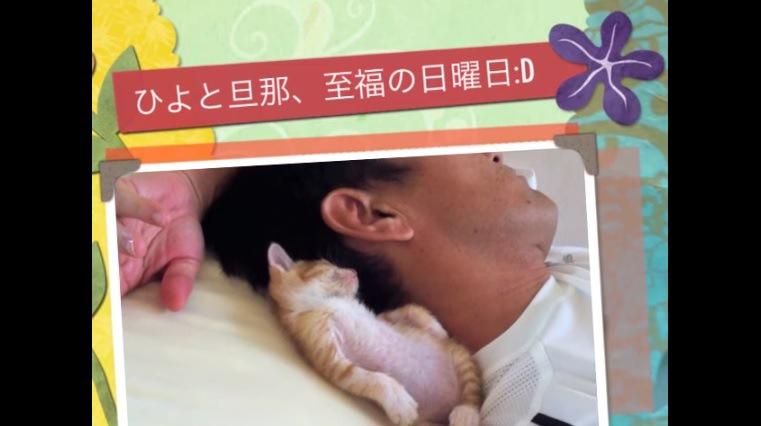 向こう側を向いて眠る子猫(写真風)