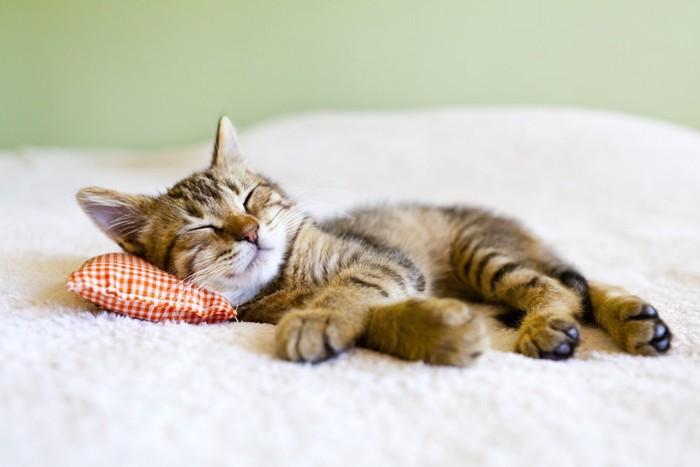 ベッドの上で枕に頭を乗せて眠るイエネコ