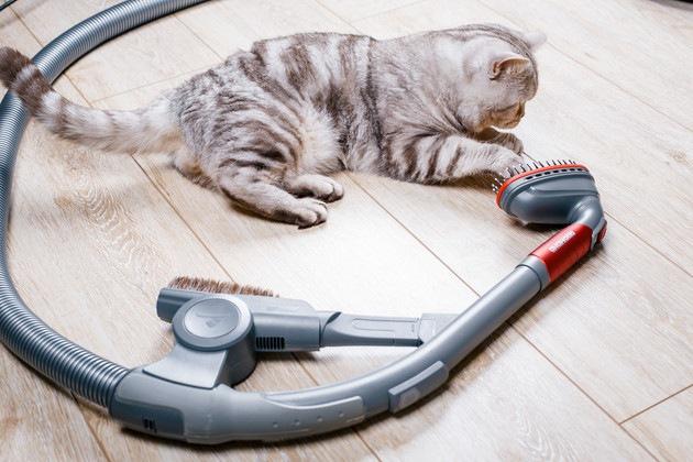 掃除機を見ている猫