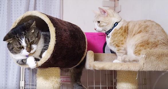 キャットタワーに上る二匹の猫