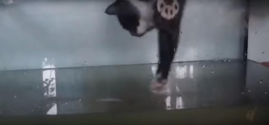 水槽に手を入れる猫
