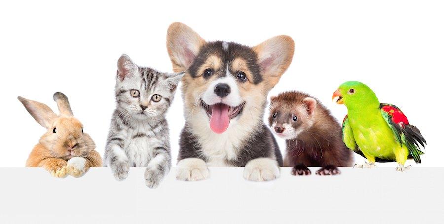 様々な種類の動物たち