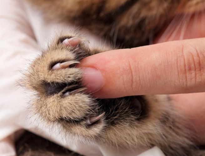 伸びた猫の爪